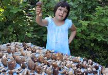 В Подмосковье выросли феноменальные грибы: так бывает раз в 10 лет