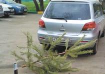 В Москве нашлись оригинальные способы избавиться от новогодних елок